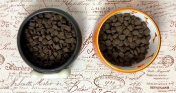 PLATINUM getreidefrei Adult Beef + Potato im Test