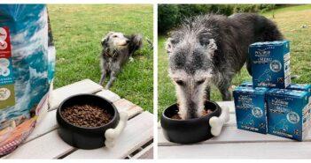 Hundefutter mit Fisch von PLATINUM und GENESIS im Test