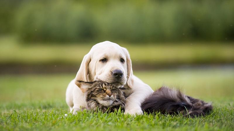 Ab und an sieht man Rückwärtsniesen bzw. Rückwärtshusten auch bei Katzen. (#01)