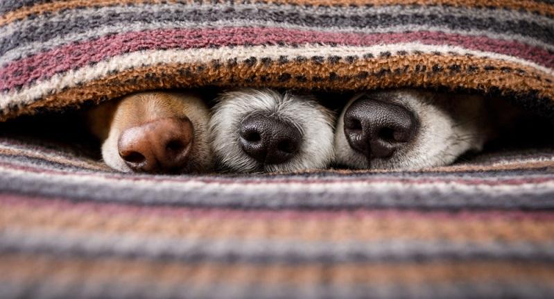 Hat ein Hund eine kalte Nase ist das ein gutes Zeichen, dennoch sollte man nicht allein nach der Hundenase beurteilen, ob ein Hund wirklich gesund und fit ist.