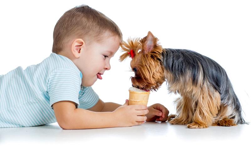 Dürfen Hunde Eis essen und wenn ja, welches Eis verträgt der Hund?  ( Foto: Shutterstock-Oksana Kuzmina)