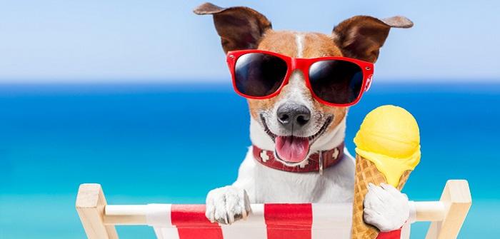 Dürfen Hunde Eis essen: Worauf sollten Hundebesitzer im Sommer achten? ( Foto: Shutterstock-Javier Brosch )