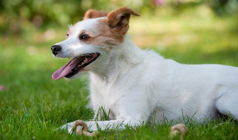 Es stellt sich die Frage, wie man seinem Haustier am besten hilft, wenn die Sommertemperaturen auf Werte über 30 Grad Celsius ansteigen. ( Foto: Shutterstock- Dora Zett)