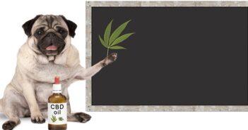CBD Öl für Hunde: Nur richtig dosiert verwenden ( Foto: Shutterstock-Monica Click)