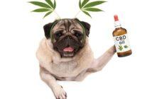 CBD Öl für Hunde zur Beruhigung? Richtig dosieren! ( Foto: Shutterstock- Monica Click )
