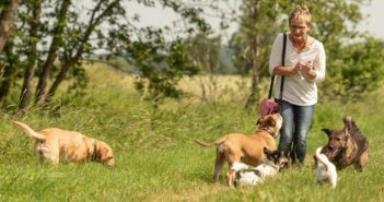 Hundesitter: Worauf Sie bei Hundebetreuung achten müssen (Foto: Shutterstock-thka)