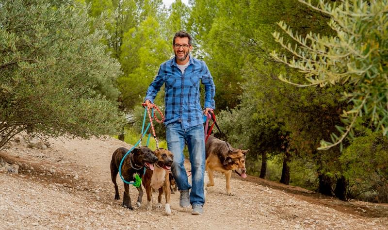 In der Regel tolerieren die Vierbeiner diese Art von Hundesitting sehr gut, denn als Rudeltiere genießen sie das Zusammensein mit anderen Hunden.  ( Foto: Shutterstock-  Sam Wordley )