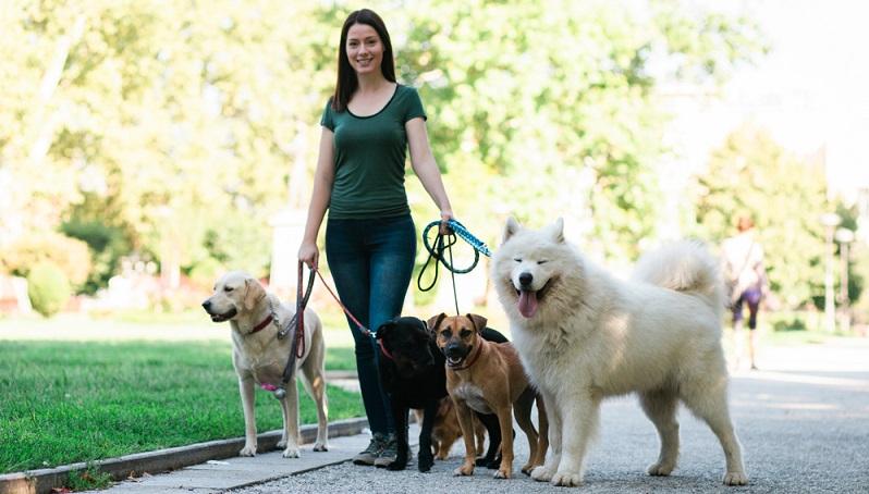 Ein professioneller Hundesitter ist eine sehr gute Lösung, um das Haustier stundenweise oder mehrere Tage betreuen zu lassen. ( Foto: Shutterstock- _hedgehog94 )