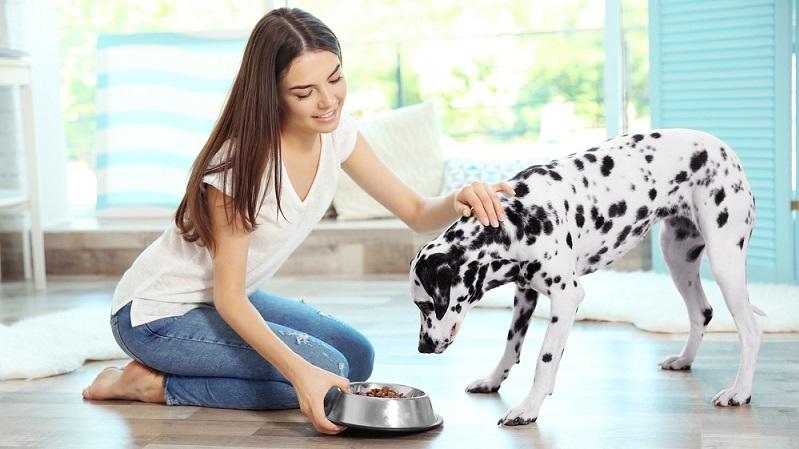 Zur Deckung des täglichen Bedarfs an diesen Fettsäuren, kann das Hundefutter mit hochwertigem Öl vermischt werden. ( Foto: Shutterstock-Africa Studio)