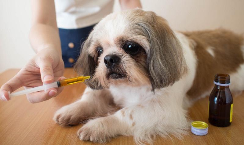 Nachtkerzenöl für Hunde hat sich als natürliches Ergänzungsfuttermittel bereits vielfach bewährt und wird vor allem bei Problemen mit der Haut und dem Fell verwendet. ( Foto: Shutterstock- Orawan Pattarawimonchai )
