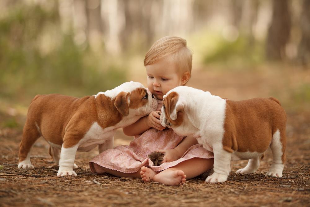 Damit die Bindung zum Besitzer gefördert wird, können Sie mit dem kleinen Hund gemeinsam spielen.  ( Foto: Shutterstock-_Serova_Ekaterina)