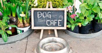 Wo sind Hunde erlaubt? Diese Plätze solltest Du alle kennen! ( Foto: Shutterstock- Tom Gowanlock )