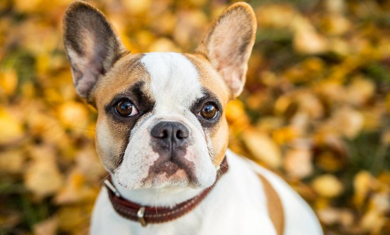 Die Erwartungen an einen Familienhund sind unterschiedlich. ( Foto: Shutterstock-Vikafoto33 )