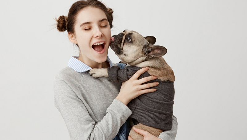 Mit der Französischen Bulldogge muss man zwar nicht zum Hundefriseur, doch einige rassetypische Merkmale bedürfen der intensiveren Pflege. ( Foto: Shutterstock-Cookie Studio )