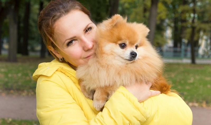 Grundsätzlich liebt es der Pomeranian in einem Familienverbund zu leben. ( Foto: Shutterstock-_EugeneEdge)