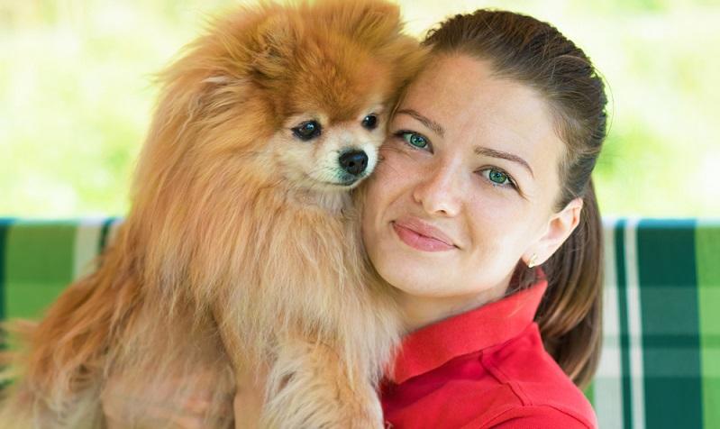 Der Pomeranian ist für eine Mini-Rasse recht robust und hat nur wenige rassetypische Probleme.  ( Foto: Shutterstock- ElenaYakimova )