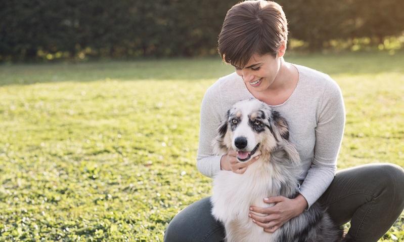 Ein Australian Shepherd ist nur für Hundebesitzer geeignet, die einen Großteil ihrer Freizeit aktiv mit ihm verbringen möchten. (Foto: Shutterstock-_Stock-Asso)