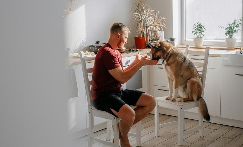 Bei der Wahl des Hundefutters darf man sich nicht von bunten Verpackungen blenden lassen, denn sonst ernährt man seine fleischfressende Fellnase unter Umständen vegetarisch. (Foto: Shutterstock-LenaLavr )