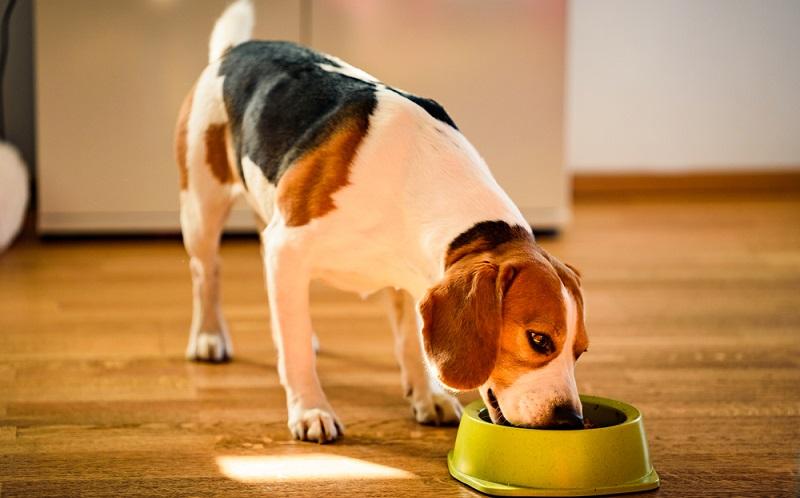 Ein Blick auf das Angebot zeigt, es gibt kaum ein Hundefutter, das nicht als gesund und qualitativ angepriesen wird. (Foto: Shutterstock- Przemek Iciak_)