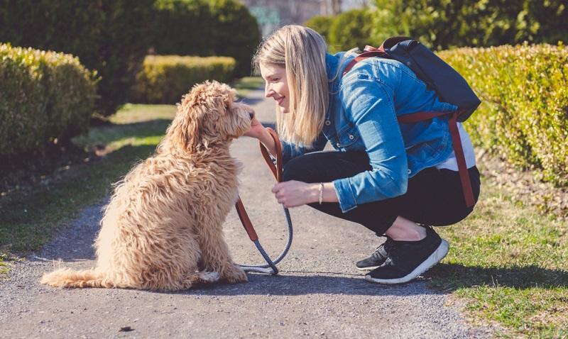 Der Labradoodle ist der ideale Gefährte für Aktivitäten in der Natur und vielseitige Hundesportarten.   (Foto: Shutterstock-lopolo)