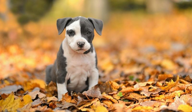 Wie bei jeder Anschaffung eines Hundes sollte man sich ausreichend über die Konsequenzen im Klaren sein. (Foto: Shutterstock-muroPhotographer )