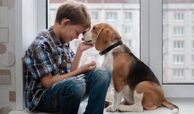 Jagdhunde sind ausdauernde und lauffreudige Hunde, der Beagle bildet da keine Ausnahme. (Foto: Shutterstock-_Alexey Androsov )