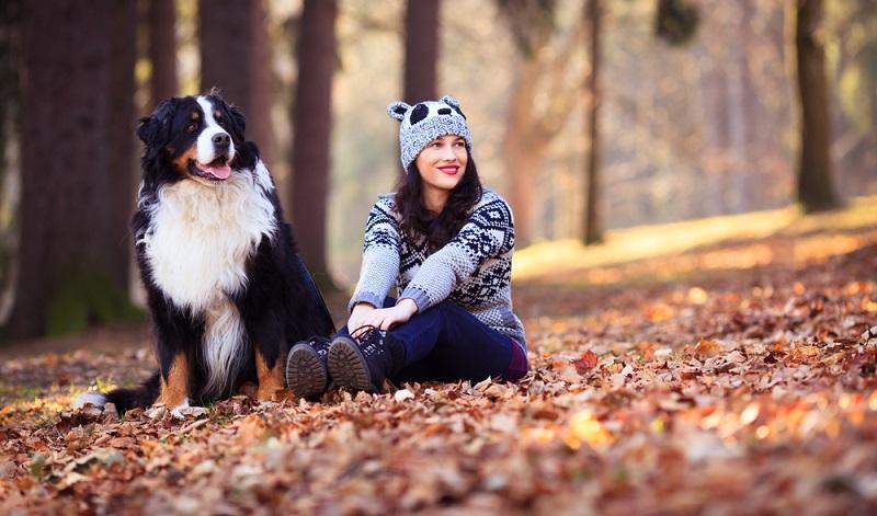 Ohne Diskussion der Berner Sennenhund ist ein großer Hund. Ausreichend Platz sowohl drinnen als auch draußen ist wichtig und so kann er artgerecht gehalten werden. (Foto: Shutterstock-_Canon Boy )