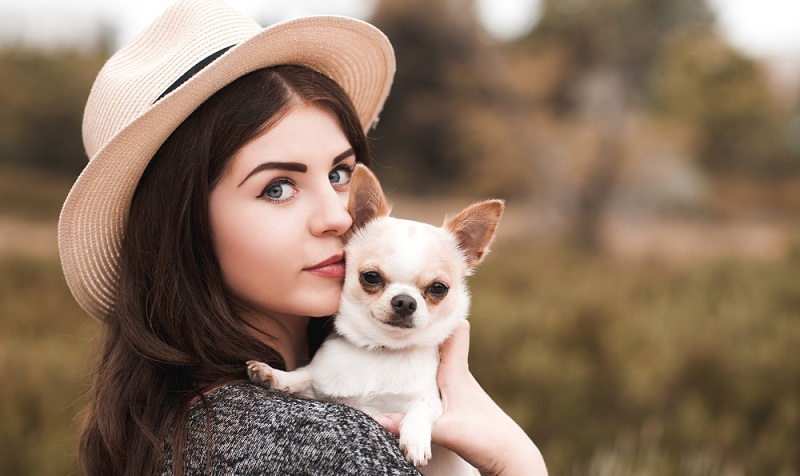 Chihuahuas sind sehr menschenbezogen und daher nicht gerne allein. Je jünger der Hund, desto weniger sollte er allein gelassen werden.  (Foto: Shutterstock-morrowlight)
