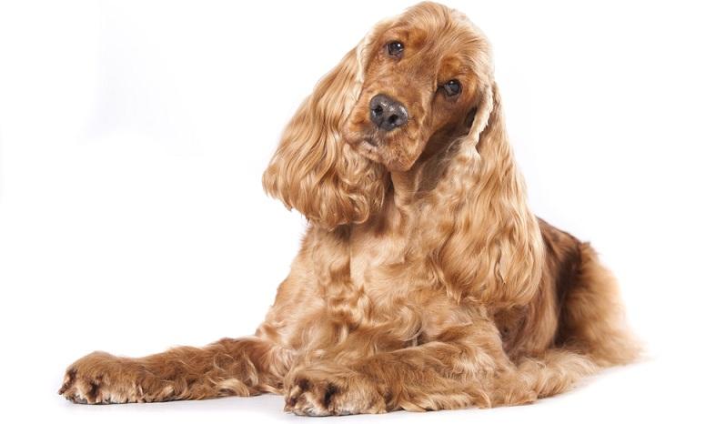 Bei langen Spaziergängen im Wald sammelt der Hund gerne Schmutz in seinem Fell. Deshalb ist eine regelmäßige Kontrolle unumgänglich.  (Foto: Shutterstock-Liliya Kulianionak )