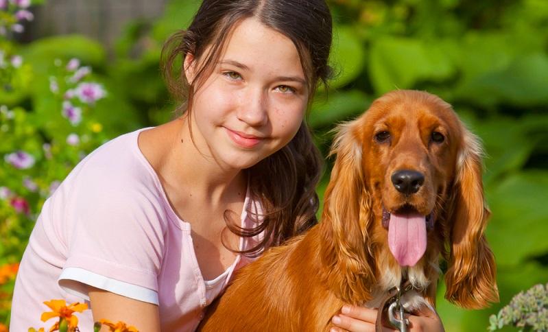 Der Cocker Spaniel wird zwischen 12 und 14 Jahre alt. Bevor man sich einen Vierbeiner anschafft, sollte man sich darüber im Klaren sein, dass man sich so lange um das Familienmitglied kümmern muss.  (Foto: Shutterstock- TCreativeMedia  )