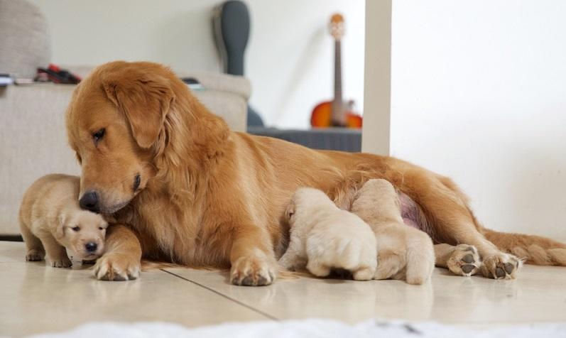 Passt der Hund in die Lebensplanung und das für die nächsten 10 bis 14 Jahren? (Foto: Shutterstock-_Fernando Castelani )