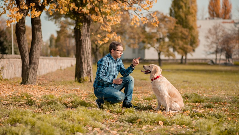 Der Golden Retriever ist ein sehr gutmütiger Hund. Hat er von Anfang an eine konsequente Erziehung erhalten ist der Rest einfach nur Freude und Spaß. (Foto: Shutterstock-_trofalenaRV )
