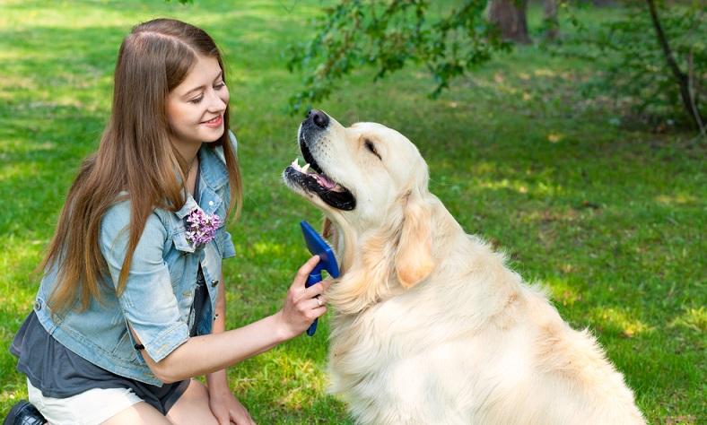 Seit vielen Jahrzehnten gehört der Golden Retriever zu den beliebtesten Familienhunden weltweit. Leider wussten das auch geldgeile Hinterhof-Vermehrer denen die Gesundheit der Welpen egal war. (Foto: Shutterstock- Photo_mts )