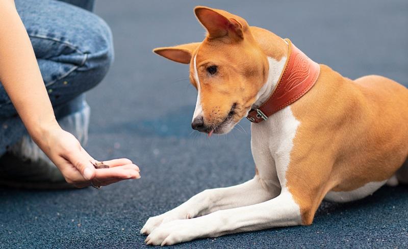Für Hunde kann es sehr frustrieren sein, ein Leckerli vor sich zu sehen, es aber nicht zu bekommen.  (Foto: Shutterstock-_ EugeneEdge  )