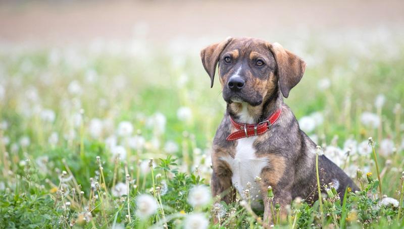 Ein stilles Training vertieft diese Übungen. Intelligente Hunde lernen stille Kommandos sehr schnell.  (Foto: Shutterstock-Melinda Nagy )