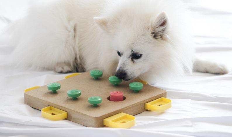 Intelligenzspielzeuge eignen sich zudem auch bei schlechtem Wetter, da die Fellnase sich damit in der Wohnung beschäftigen kann.  (Foto: Shutterstock- Lenti Hill )