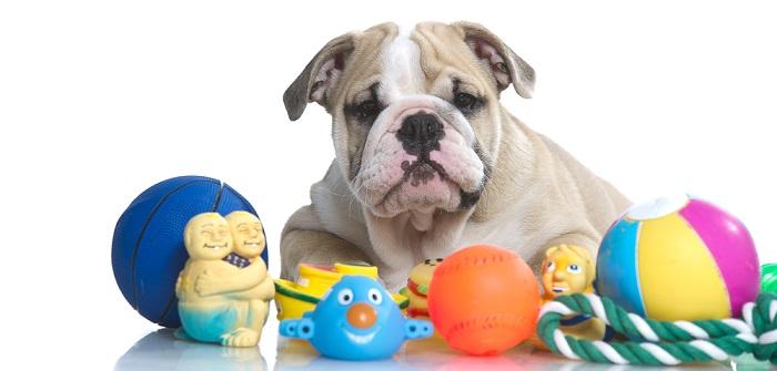 Hund geistig auslasten: 11 sportliche Aufgaben, aber nur für smarte Fellnasen (Foto: Shutterstock- Tatiana Katsai )