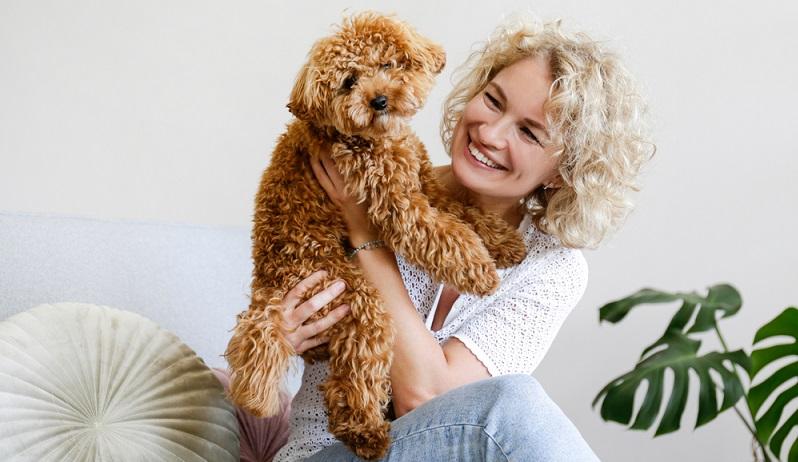 Der kleine lockige Kerl ist nicht nur ein wunderbarer Familienhund auch für den Hundesport ist er bestens geeignet. (Foto: Shutterstock-evrymmnt )
