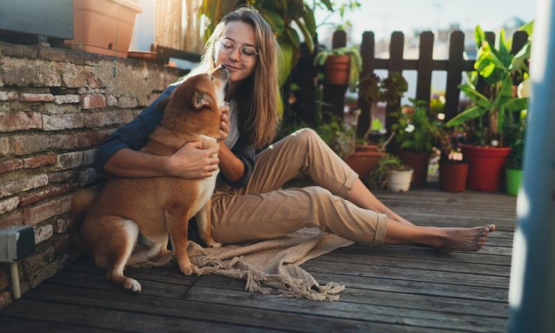 Selbst erfahrene Hundeführer gestehen dem Shiba Inu eine gewisse Eigenständigkeit und Selbstständigkeit zu (Foto: Shutterstock- ImYanis)