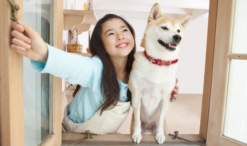 Für kleiner Kinder als Familienhund eignet sich der kleine Japaner nur bedingt. Ratsam ist es, dass die Kinder schon älter sind. (Foto: Shutterstock-_JenJ Payless2)