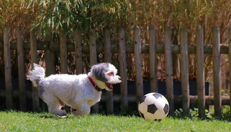 Seine größte Leidenschaft ist das Spielen. (Foto: Shutterstock-AM-IDE )