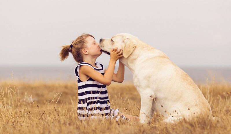 Bei artgerechter Haltung gibt es keinen gechillteren und gutmütigeren Vierbeiner als den Labrador Retriever. (Foto: Shutterstock-juninatt)