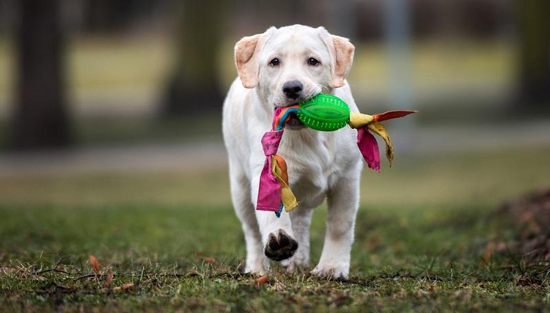 Für die nächsten 10 bis 14 Jahre kommen dann noch Kosten wie Futter, Pflegemittel, Steuern, Versicherung, Tierarzt und Hundeschule/ Hundeverein dazu. (Foto: Shutterstock-otsphoto)