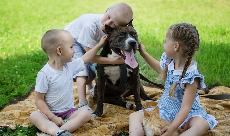 Kein Tier ist von Haus aus aggressiv und böse, das macht der Mensch mit entsprechender Erziehung. (Foto: Shutterstock- DoublePHOTO studio )