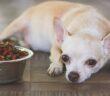 Immunsystem stärken beim Hund: Zahlreiche Faktoren spielen hinein (Foto: Shutterstock-_Phuttharak )