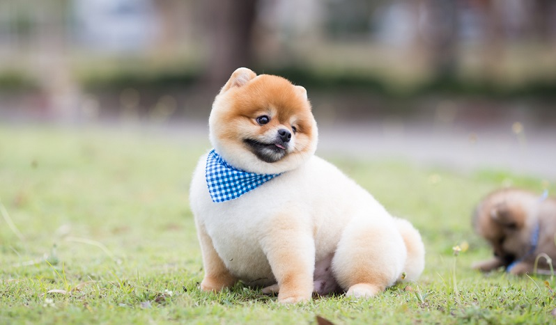 Auch Hunde sollten nicht übergewichtig sein. ( Foto: Shutterstock- Yossapong tulachom )