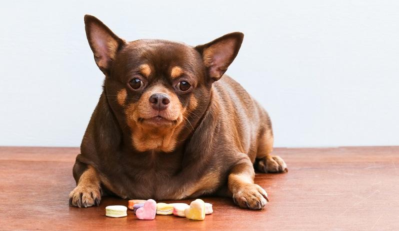 So weit darf es ein Hundebesitzer nicht kommen lassen. (Foto: Shutterstock- Monkeyoum)