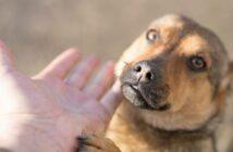 Dirofilariose bei Hunden (Foto: shutterstock - schankz)