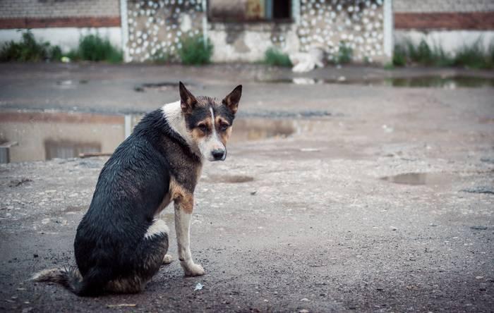 Zahlreiche herrenlose Hunde in unzähligen Ländern benötigen unsere Hilfe. (Foto: shutterstock - Ilona Sosnina)